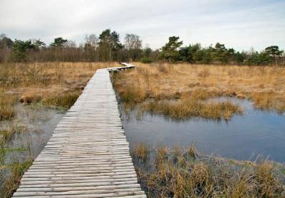 Verken Nationaal De Groote Peel