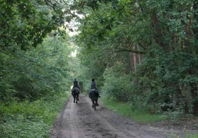 Kronenberger Heide Route